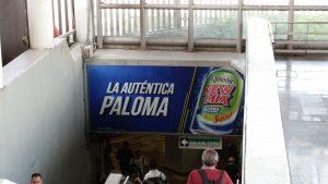 id-0b07147gan-la-autentica-paloma-4